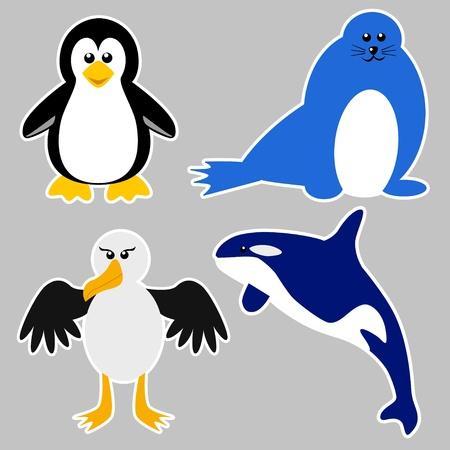 antartide: Animali Antartide