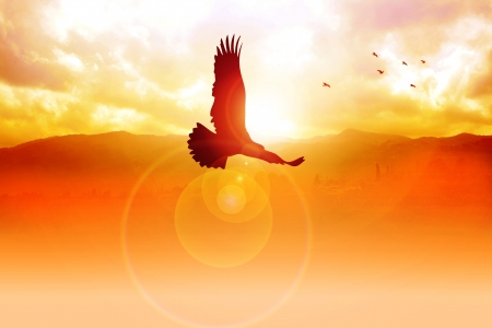 high rises: Silhouette illustration of an eagle flying on sunrise