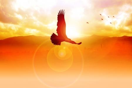 silhouette aquila: Silhouette illustrazione di un'aquila che volava su Sunrise Archivio Fotografico