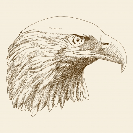 prey: Sketch illustration of eagle head  Illustration