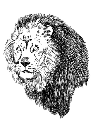 Sketch illustration of lion head Vector