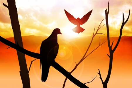 rise fall: Silhouette of birds at sunrise Stock Photo