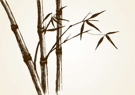 pencil plant: Sketch illustration of bamboo tree