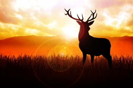 panoramic sky: Silhouette illustration of a deer on meadow during sunrise