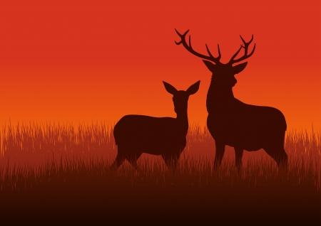 Illustration silhouette d'un cerf et la biche sur la prairie