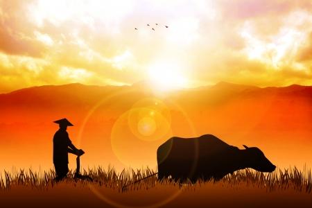 paddy field: Illustration of a farmer plowing the fields