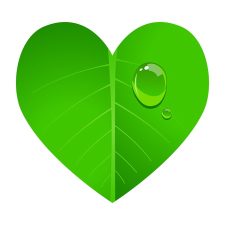 illustration of a leaf shaped in heart with dew on it Vector