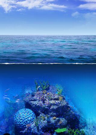 ocean view: Corals in blue sea