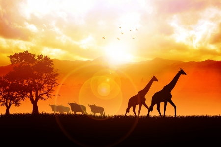 Silhouette illustration of African wildlife