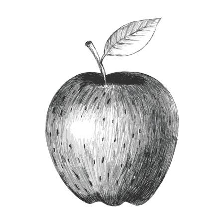 tempting: Sketch illustration of an apple Illustration