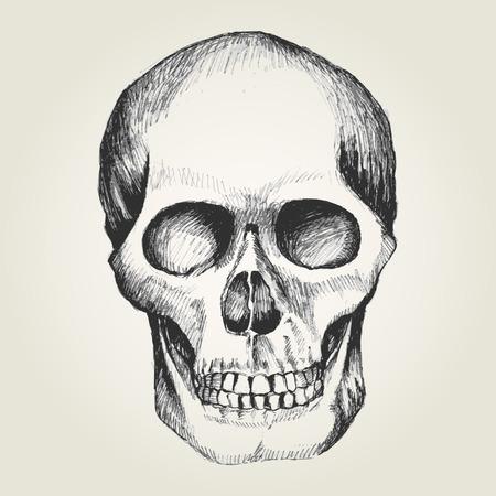 skull drawing stock photos royalty free skull drawing images