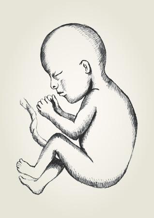 Sketch illustration of human fetus