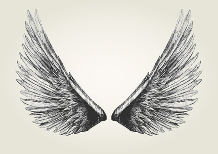 angels: Sketch illustration of wings Illustration