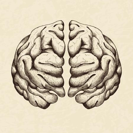 Sketch illustration of human brain Vector