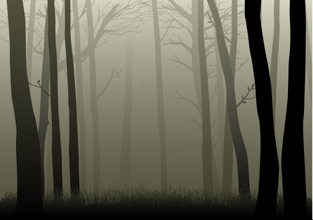 Vector illustration of misty woods Çizim