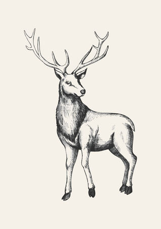 hunting season: Sketch illustration of a reindeer