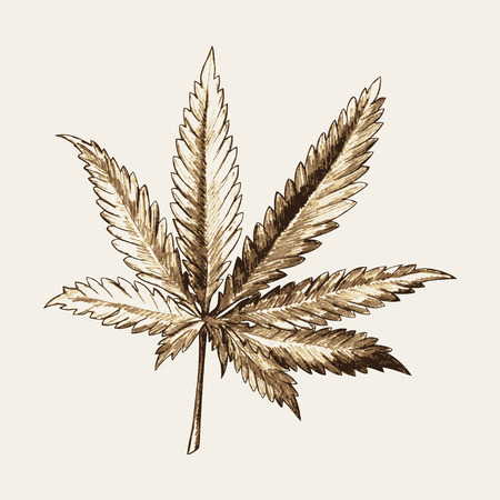 Sketch illustration of marijuana (cannabis) or hemp leaf