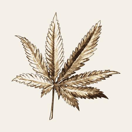 hanf: Skizze Abbildung von Marihuana (Cannabis) oder Hanfblatt