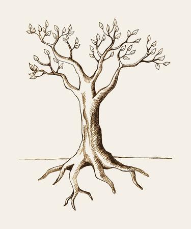 arbol con raices: Ilustración Boceto de un árbol Vectores