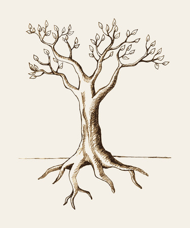 tree roots: Sketch illustration of a tree