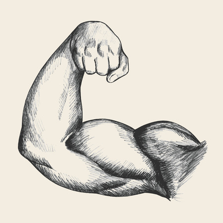 muscle: Sketch illustration of muscular human male right arm from front view Illustration