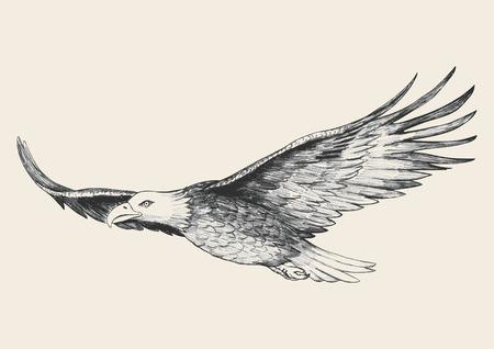 aguila calva: Ilustraci�n Boceto de un �guila de alto vuelo Vectores