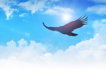 adler silhouette: Ein Adler fliegen in der Luft Lizenzfreie Bilder