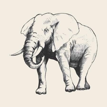 endangered: Pencil sketch of an elephant traced in Adobe Illustrator