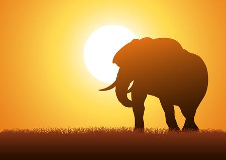 siluetas de elefantes: Ilustración de la silueta de un elefante contra el fondo la puesta del sol