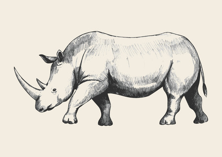 endangered: Sketch of rhinoceros Illustration