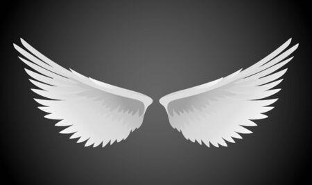 ali angelo: Illustrazione vettoriale di ali bianche Vettoriali