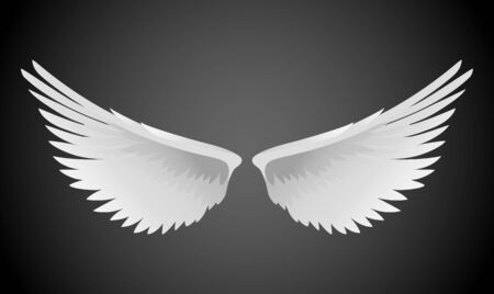 wings angel: Vector illustration of white wings Illustration
