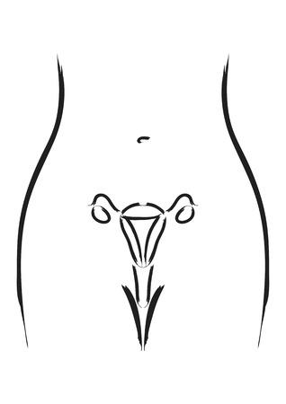femme dessin: Art simple de ligne de organes reproducteurs féminins