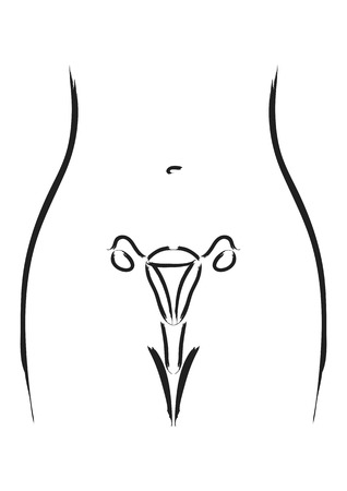 sistema reproductor femenino: Arte lineal simple de los órganos reproductores femeninos