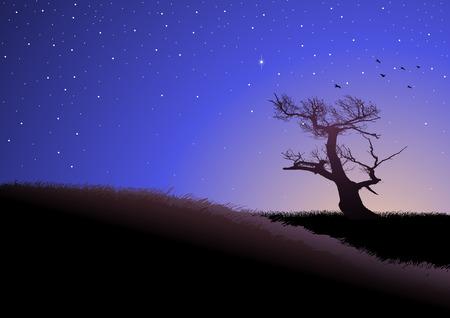 stars night: Illustration of grassland at dusk Illustration