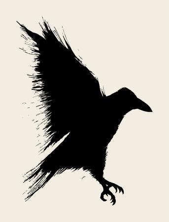 schwarz: Illustration einer Krähe Illustration