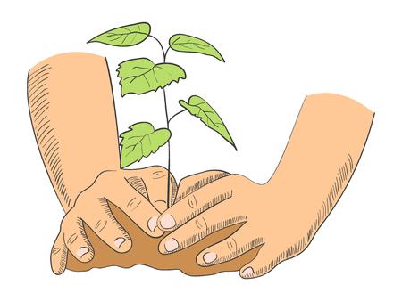 Ilustración de las manos de plantar árboles jóvenes Ilustración de vector