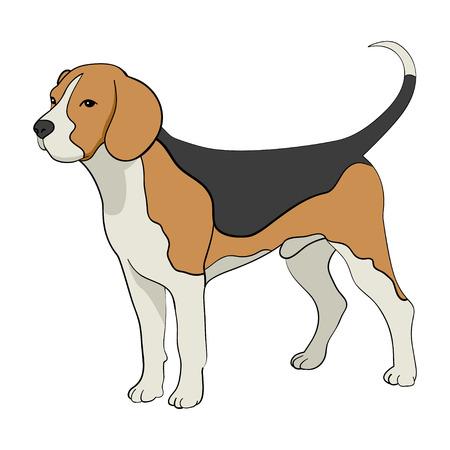 dog isolated: Cartoon illustration of beagle dog isolated on white Illustration