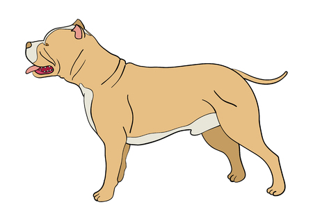 pit bull: Cartoon illustration of pit bull dog isolated on white
