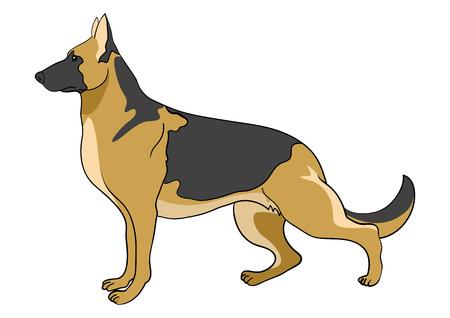 german shepherd dog: Cartoon illustration of german shepherd dog isolated on white
