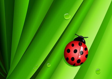 lady bug: Graphic illustration of a lady bug on green leaves