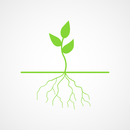 new life: Graphic illustration of young tree with root Illustration