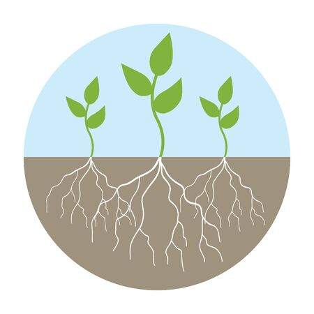 rooted: Graphic illustration of young trees with root