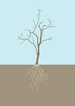 young leaves: Graphic illustration of tree with root