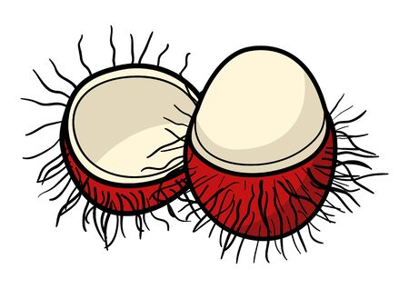 rambutan: Graphic illustration of rambutan, south east Asian delicious sweet fruit isolated on white