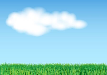 land plant: Illustration of grass on light blue background Illustration