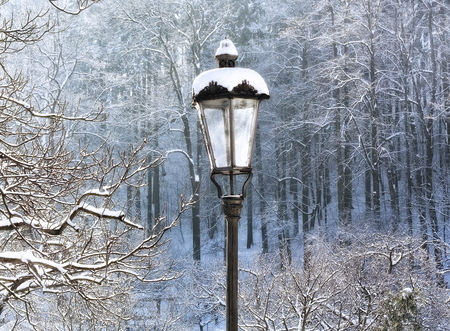 a forest of in that wild shadow trees the produces lamp inspirations chandelier