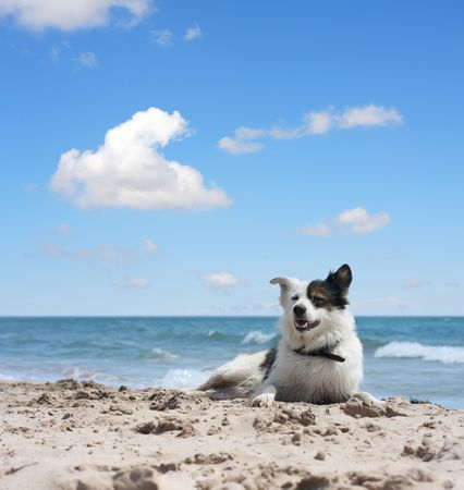 cur: dog under blue sky Stock Photo