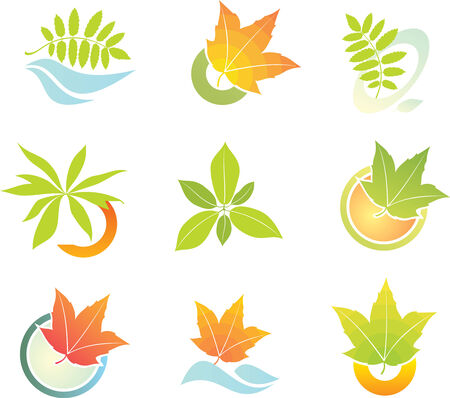 leaf logo: design logo leaf element Illustration