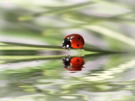 ladybug Stock Photo - 4347185